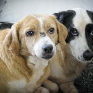 Estudo da Fiocruz revela que cães e gatos podem se infectar com a Covid-19