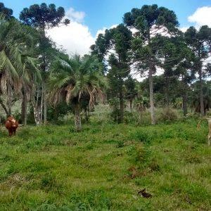 """Programa de resgate de """"Potreiros Tradicionais do RS"""" fica entre os 10 vencedores de Prêmio do BNDES"""