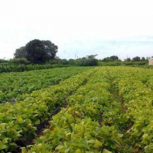 Crédito rural atinge mais de R$ 200 bilhões em dez meses