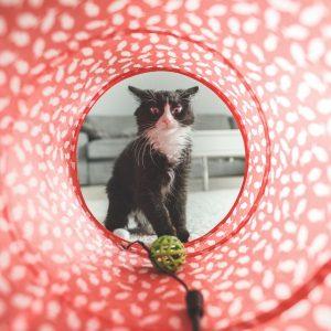 9 acessórios para entreter seu gato enquanto você está fora