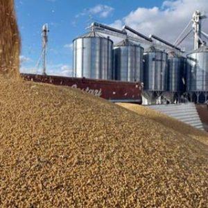 Capacidade de armazenamento agrícola teve retração, diz IBGE