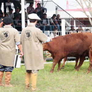 A 44ª Expointer contará com 4.057 animais inscritos no Parque