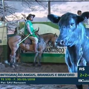 Integração fatura R$ 5,9 milhões e bate média de R$ 18,3 mil para touros Angus