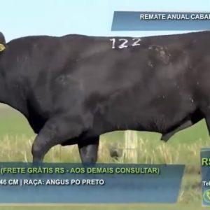 São Bibiano fatura 35% a mais do que em 2020 e bate média de R$ 16,3 mil para touros Angus